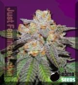 Buy Auto Cherry Bomb feminised medicinal cannabis seeds